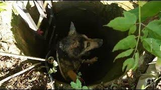МЧС спасло двух собак из заброшенных колодцев