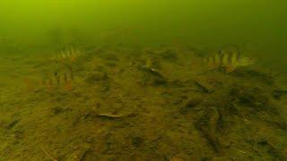Подводные съёмки на зимней рыбалке на экшн камеру