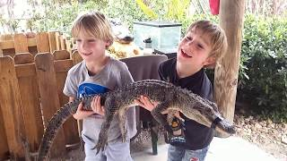 Aligators and Airboats - Florida Everglades Travel Kids, Supertwins TV