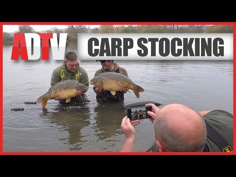 Introducing New Fish! Carp Stocking - VS Fisheries
