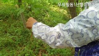 2020606 장뇌삼 캐기 체험..
