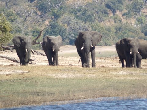 All Inclusive Trips To Africa | Safari Travel Agency