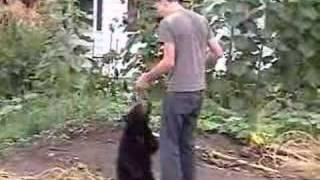 Wild Black Bear Cub Eating From Hand