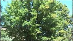 Black Spots on Leaves Explained