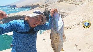 Wow! Pesca de Corvinas y Sargos con Carrete Manual, ANZUELO Octopus y línea de mano básico