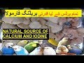 Natural source of Calcium supplements and Iodine for all Aviary birds - Calcium supplements