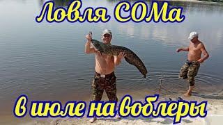 Ловля сома в июле на реке Припять троллингом на воблеры ХАЛКО