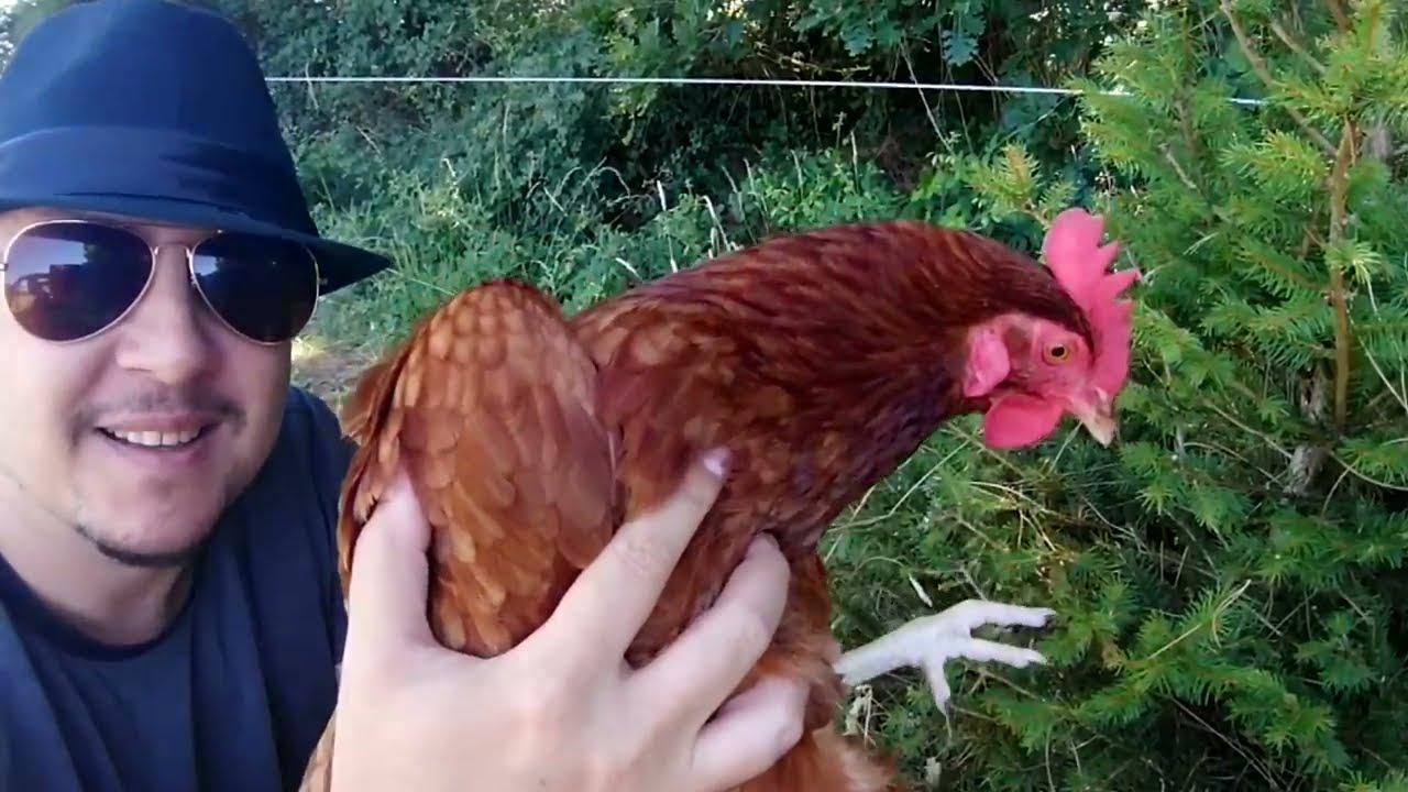 CONFIDENCES - NEVERLAND A VENDRE ?