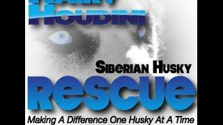Urban Mushing With Rescued Huskies