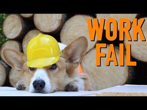 BUILDING A DOG HOUSE - Topi the Corgi