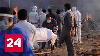 Ситуация с COVID-19 в Индии подтверждает – местный штамм более заразен - Россия 24 