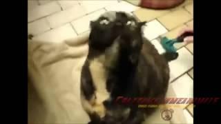 Видео смешные животные скачать бесплатно