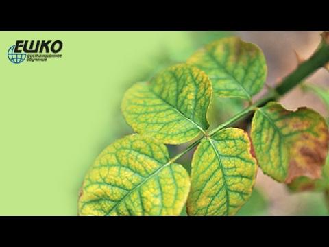 Визуальные признаки недостатка и избытка питательных элементов у растений...