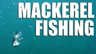 Mackerel fishing off the English south coast - perfect holiday fun