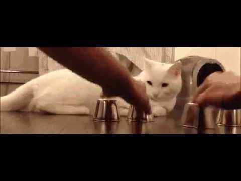 smart cats.mp4