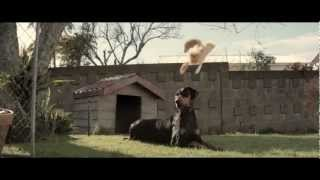 Funny Cat TV Commercial - 2013 Toyota Corolla