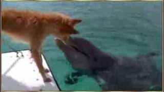 Дельфин и собака..