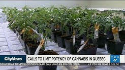 Quebec psychiatrists call for potency limits on cannabis