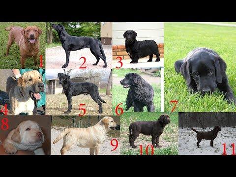 Определить породу щенка или собаки по фотографии?