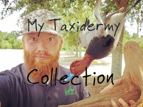 My Taxidermy Collection!!!
