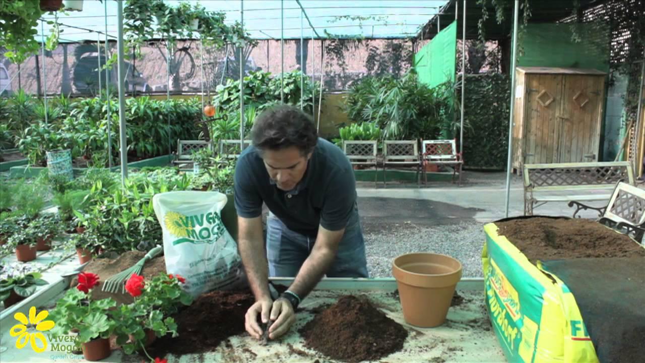 Preparacion de sustrato para maceta youtube for Materiales para un vivero