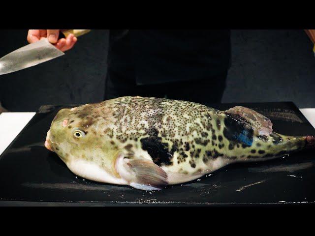トラフグのさばき方からフルコース料理まで!in 銀座, 東京∥Japanese Pufferfish Full course dinner∥ふぐ倶楽部 miyawaki∥Japanese Food