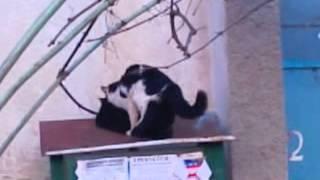 4 кота на одну кошку