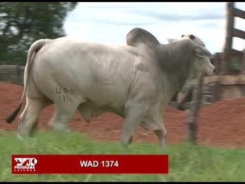 LOTE 80 - WAD 1374