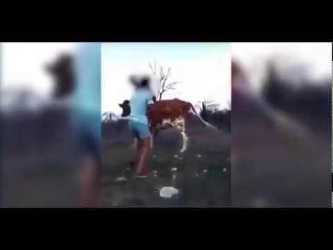 Indignante: Adolescentes golpearon a una vaca y le tiraron una piedra