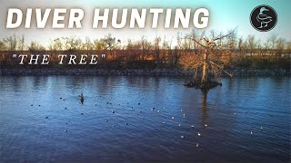 LOUISIANA Diver Duck Hunting (WE HUNTED OFF 'THE TREE!')