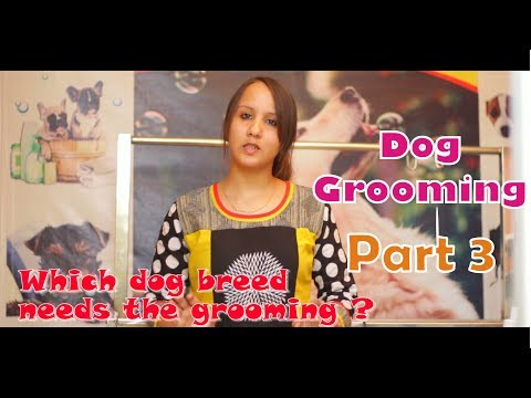 Which dog breeds need the grooming ? by Yamini Mehta