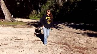Puppy Training Doberman Maverick Leash Training