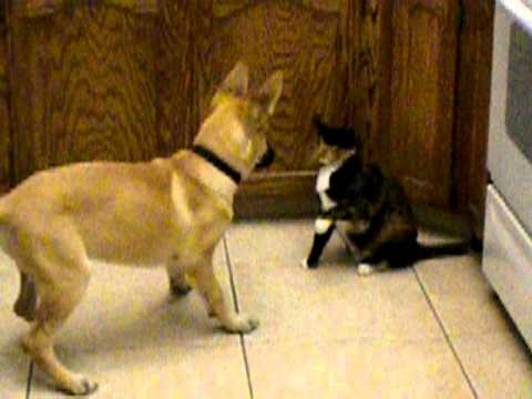 Why Cat Don T Like Dogs