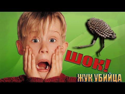 ШОК! ЖУК-УБИЙЦА УЖЕ В РОССИИ