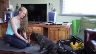 Part 3 Train My French Bulldog Impulse Control | Dog Training Tutorials