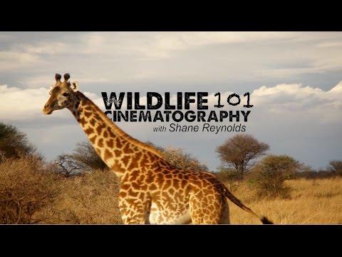 WILDLIFE CINEMATOGRAPHY 101 with Shane O