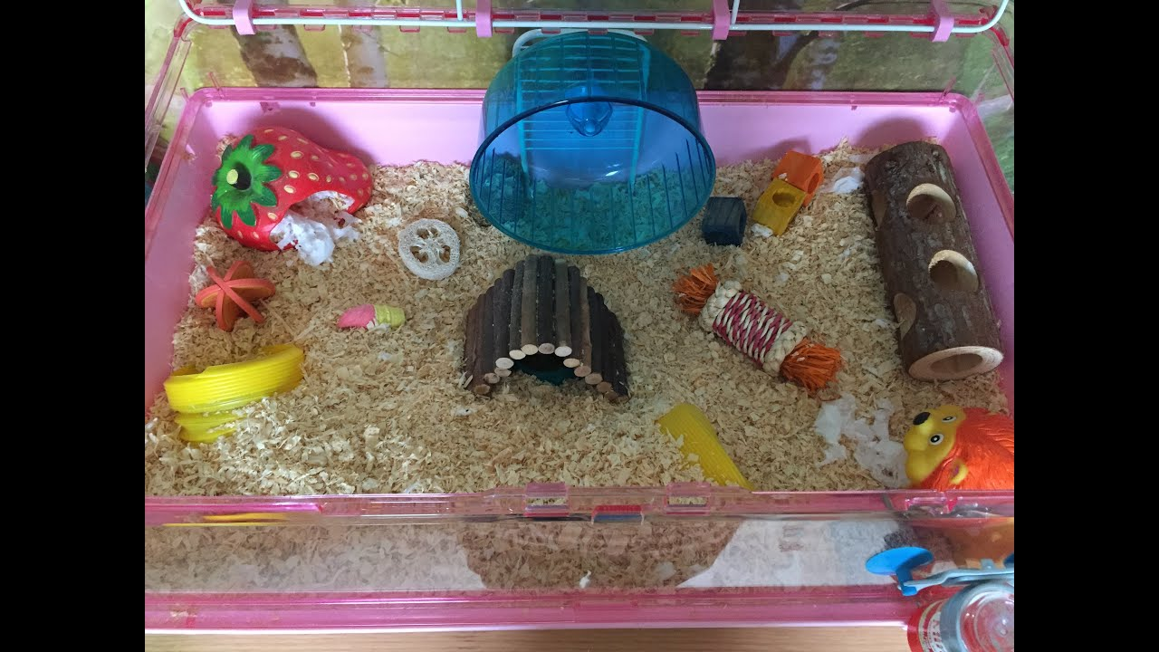 how to set up a basic hamster cage perfectpetplace youtube