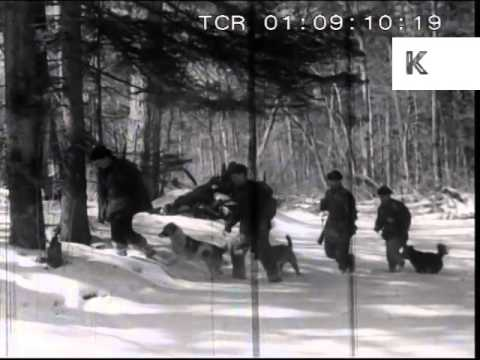 Early 1950s Soviet Russia, Tiger Hunting In Siberia