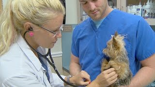 Should Your Pet Have Health Insurance?