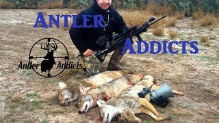 Coyote Hunting With AR-15 5.56 - Triple Song Dog