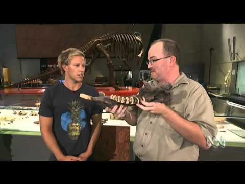 Dinosaurs & Megabeasts: ABC Splash Live