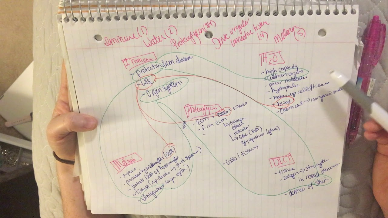 Human Tissue Concept Map.Concept Mapping For Anatomy Physiology Youtube