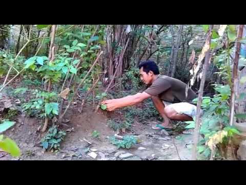 berburu elang dengan jebakan tali jerat dan dengan jala - YouTube