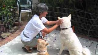 Dog Training Tips:  Body Handling Exercises