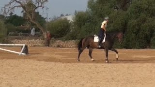 jumping lesson young horse including lunging over fences