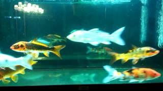 Красивые рыбки ) 😁💲💲💲