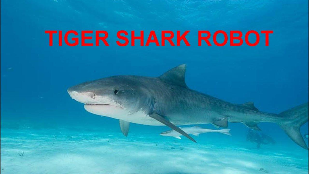 tiger shark robot. Black Bedroom Furniture Sets. Home Design Ideas