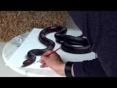 Vẽ hình 3D con rắn giống như thật – 3D drawing unbelievable