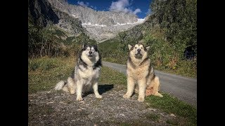 TRAVELLING EUROPE WITH MALAMUTES- FRANCE VLOG, CLIMBING MOUNTAINS, CABLE CARS, GLACIERS