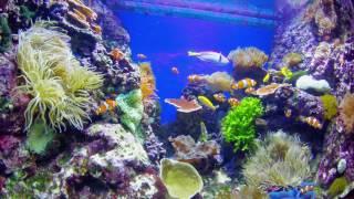 The Biggest Aquarium in the World - SEA  Aquarium Singapore